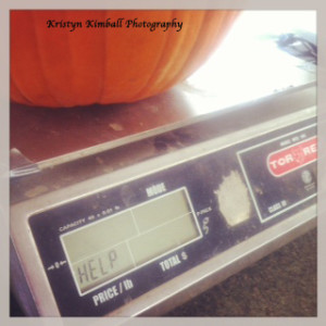 pumpkin scale